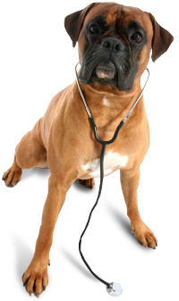 veterinarian_dog.png